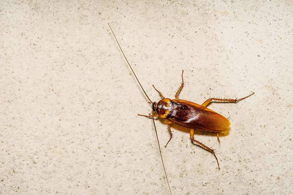 Cockroach Control, Pest Control in Finchley Central, N3. Call Now 020 8166 9746